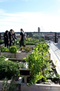 The Commons Rooftop Gardens